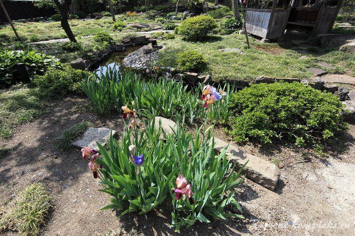 Сад по-японски