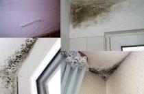 Плесень в доме | Как избавится удалить плесень?